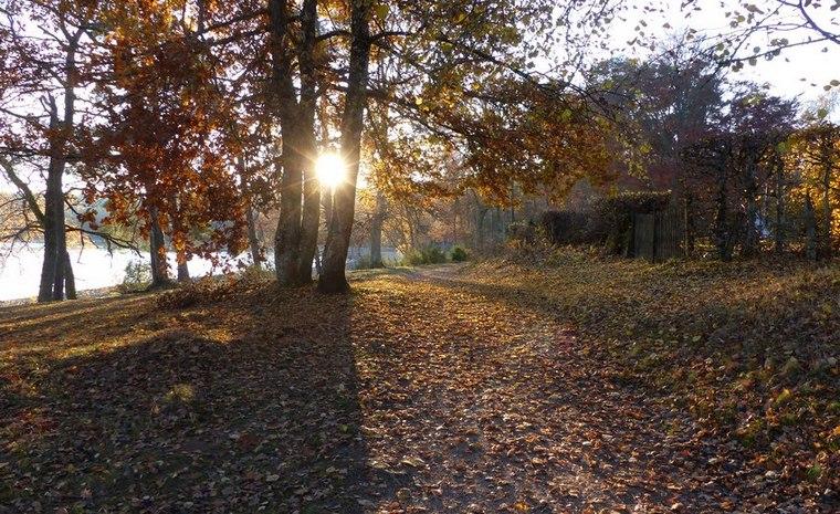 Coucher de soleil entre les arbres pendant la randonnée