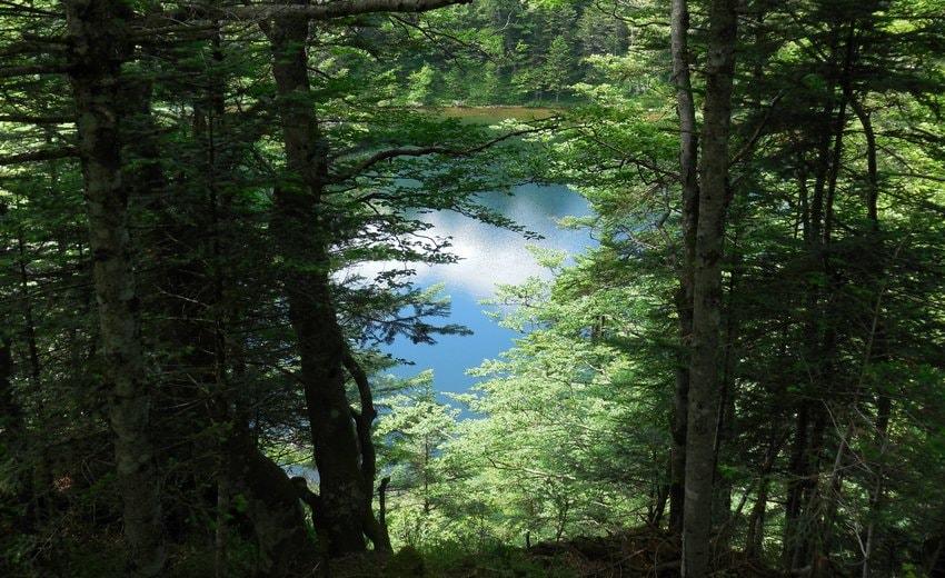 Trouée entre les arbres sur l'étang de Guzet